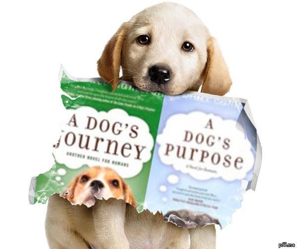 dogsjourney-purpose