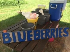 blueberries10-300x225