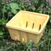 Market-Stand Ceramic Berry Boxes - Yellow
