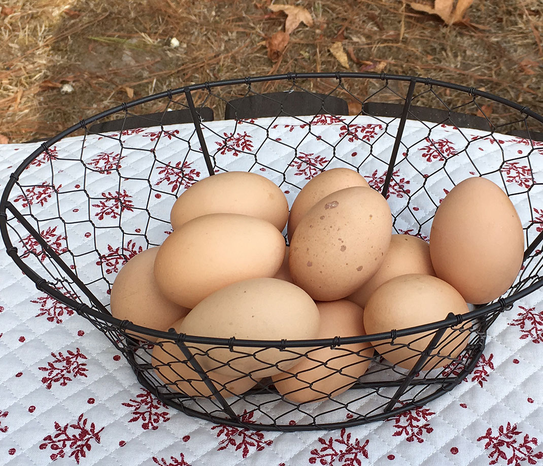 chicken-wire-egg-basket